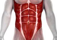 Entender los llamados músculos estabilizadores