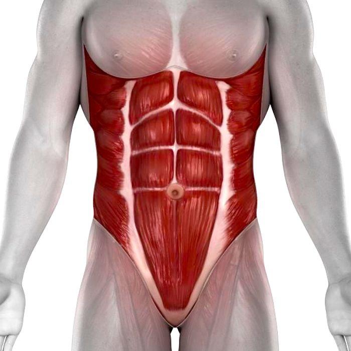Entenda os chamados músculos estabilizadores