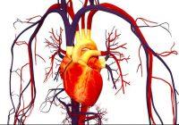 Kräuter zur Erhöhung des HDL und zur Verbesserung des LDL: Senken Sie das Cholesterin auf natürliche Weise mit Pflanzen