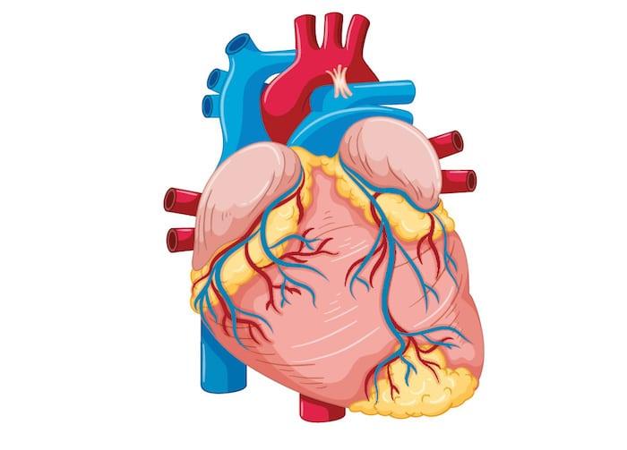 Syndrome de tachycardie orthostatique posturale (STPO)