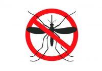 Cómo repeler a los insectos: fórmulas naturales para repeler a los insectos