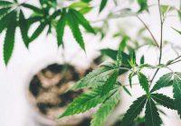 Marihuana und eine Säure-Reflux-Diät: Verschlechtert Rauchen Ihren Säuregehalt?