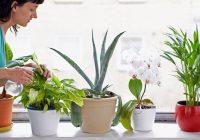 Les meilleures plantes pour la qualité de l'air intérieur