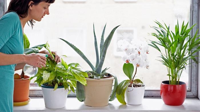 أفضل النباتات لجودة الهواء الداخلي