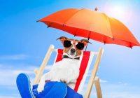 Wie man Haustiere vor der Sonne schützt
