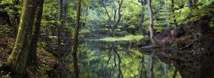 Shinrin-योकू, सांस की तकलीफ के उपचार के लिए प्राकृतिक वन चिकित्सा