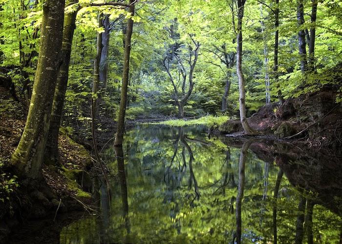 Shinrin-Yoku, thérapie de forêt pour le traitement naturel de l'essoufflement