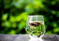 El té verde: tremendamente saludable, pero no una cura