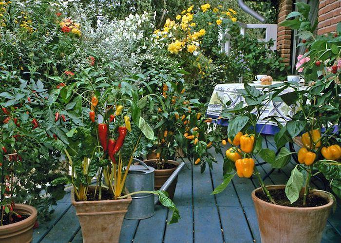 البستنة الحضرية - مساعدة: الخضروات التي يمكن أن تنمو في وعاء الخاص بك