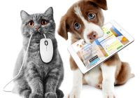 Interessantes über Hunde und Katzen