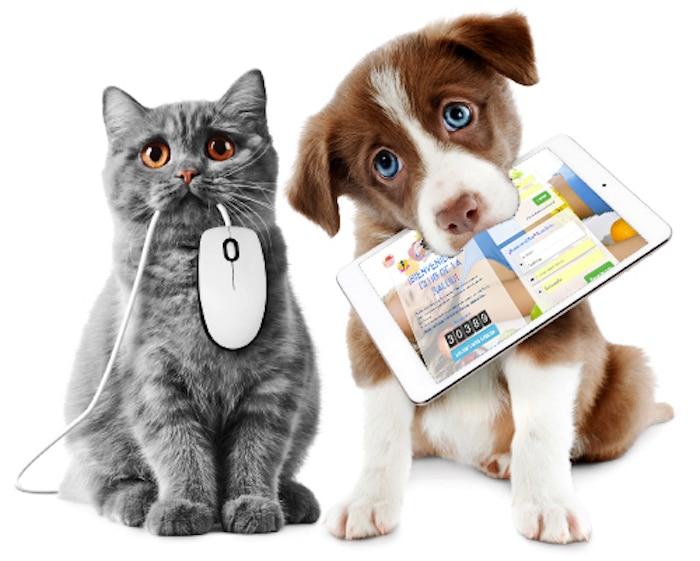 关于狗和猫的有趣的事情