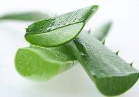 Remedios caseros para quemaduras y cortes de la piel