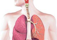 Bronchite: causes, symptômes et traitement