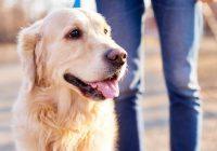 与狗一起散步:为狗和主人提供更好的健康