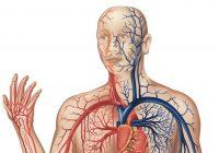 Mauvaise circulation: causes, signes et symptômes et traitement