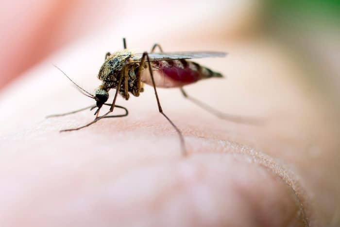 मच्छर के काटने के लिए घर उपचार