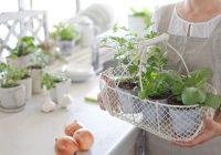 我的伊甸园:11草药,你可以在你的厨房里种植