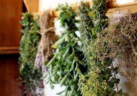10 hierbas y especias de gran alcance poderoso su cuerpo necesita impulsar el sistema inmune