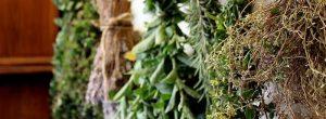 10 ervas e especiarias de grande alcance poderoso o seu corpo precisa de impulsionar o sistema imunológico