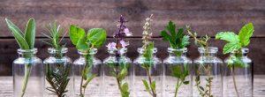 As dez melhores ervas para a saúde da próstata