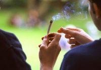 El consumo de cannabis está relacionado con el riesgo de trastornos psicóticos más adelante en la vida