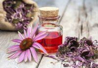 Echinacea não combate o resfriado comum, de acordo com um novo estudo