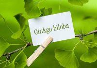 Ginkgo Biloba un suplemento que aumenta el flujo sanguíneo, pero ¿puede ayudar a tratar la disfunción eréctil?