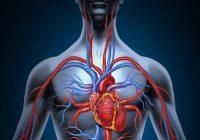 المنتجات الطبيعية للدورة الدموية مثالية
