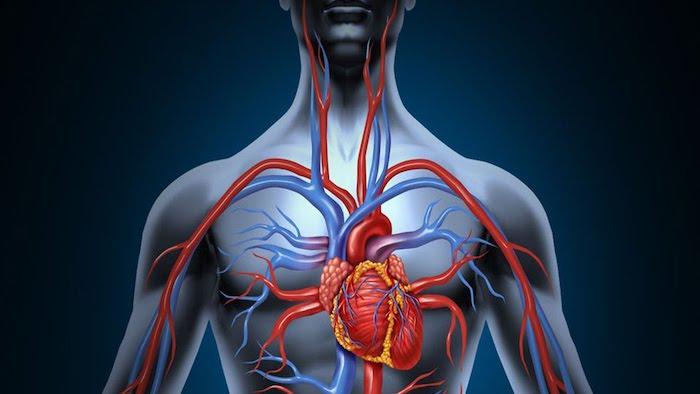 Productos naturales para una circulación sanguínea ideal
