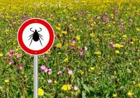 """Mutter Natur gibt """"Licht für Lyme-Borreliose"""": Könnten diese antimikrobiellen Kräuter helfen, Lyme-Borreliose vorzubeugen?"""