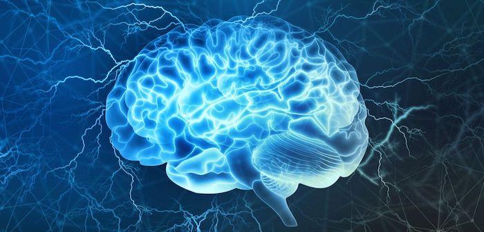 """Los """"canales pequeños"""" en el cráneo permiten que el tejido cerebral lesionado reclute ayuda rápidamente."""