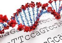 Le lien entre l'obésité, le cerveau et la génétique