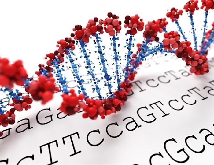 El vínculo entre la obesidad, el cerebro y la genética