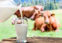 La leche en el desayuno reduce el nivel de azúcar en la sangre durante el día