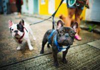 Perros: nuestros mejores amigos en la enfermedad y en la salud