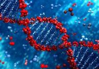 DNA spielt eine viel wichtigere Rolle bei der Entwicklung von Bluthochdruck als bisher angenommen