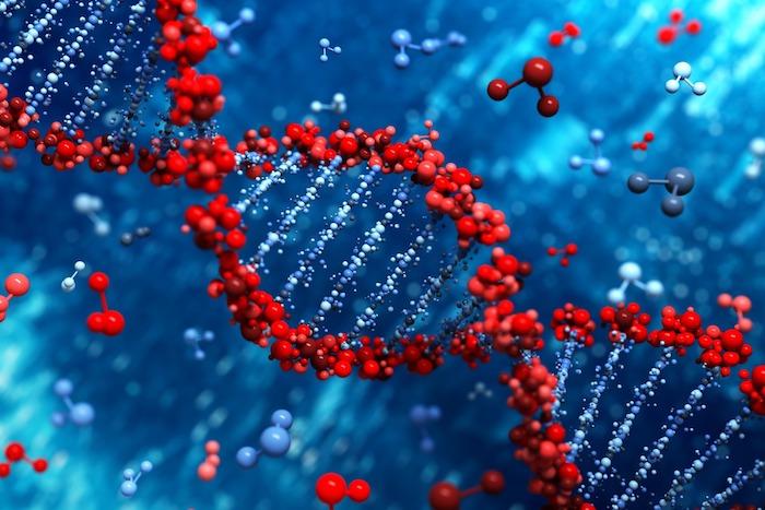 El ADN desempeña un papel mucho más importante en el desarrollo de la presión arterial alta de lo que se creía anteriormente