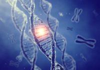 Das menschliche Genom könnte bis zu 20 Prozent weniger Gene enthalten, so die Forscher