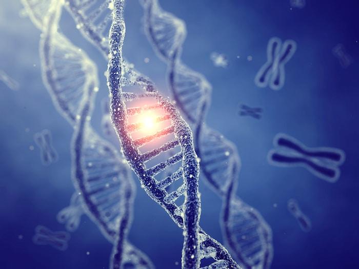 Les chercheurs révèlent que le génome humain pourrait contenir jusqu'à 20 pour cent en moins de gènes