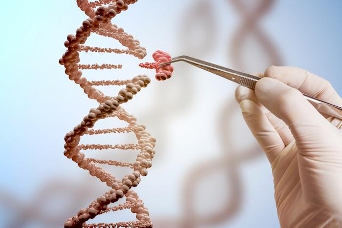 Guiada por CRISPR, la edición de genes prenatales muestra una prueba de concepto en el tratamiento de enfermedades antes del nacimiento