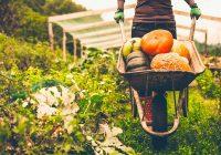 一项新研究面临有机食品对抗癌症。