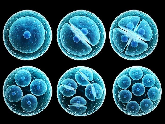 Las células madre pueden convertirse en cualquier tipo de célula antes de que se diferencien