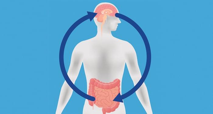 Entdeckt den Zusammenhang zwischen Darmflora und Multipler Sklerose entdeckt