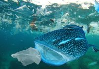 Los microplásticos están en todas partes, pero ¿importa?