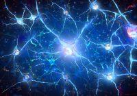 Une nouvelle étude explore comment le cerveau peut anticiper les événements et ce qui se passe avec ce mécanisme dans certaines conditions neurodégénératives.