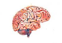 تقدم دراسة حديثة أدلة حول كيفية تطور الحالة المزاجية المنخفضة في المخ