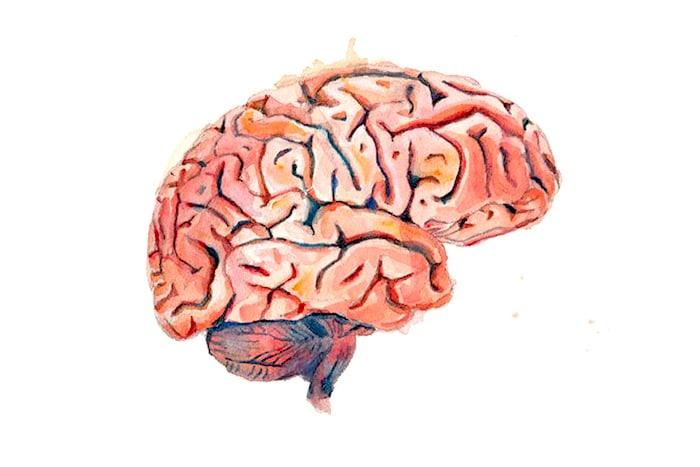 Um estudo recente fornece pistas sobre como o humor se desenvolve no cérebro
