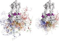 """蛋白质的""""邪恶双胞胎""""如何促进癌症生长?"""