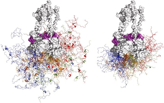"""Wie fördert ein """"böser Zwilling"""" eines Proteins das Krebswachstum?"""
