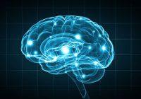 ¿Podemos influir en los circuitos cerebrales para tratar la depresión y la adicción?
